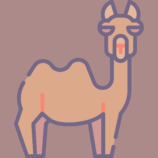 Camel - Camila