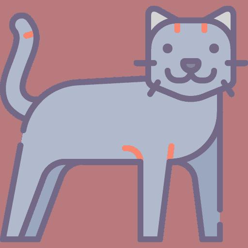 Cat - Pisica