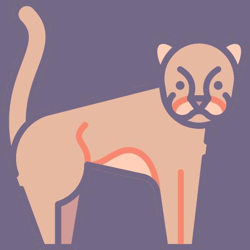 Cougar - Puma
