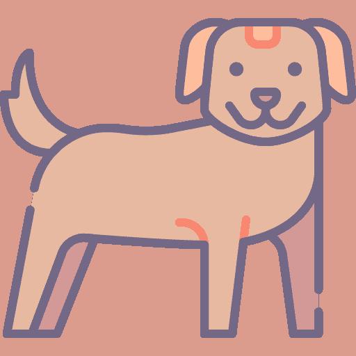 Dog - Caine