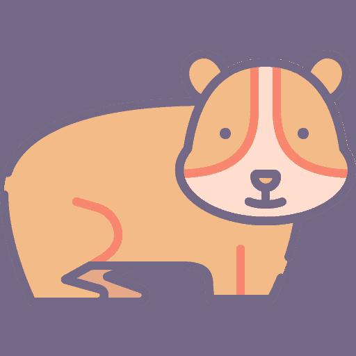 Guinea Pig - Porc de Guinea
