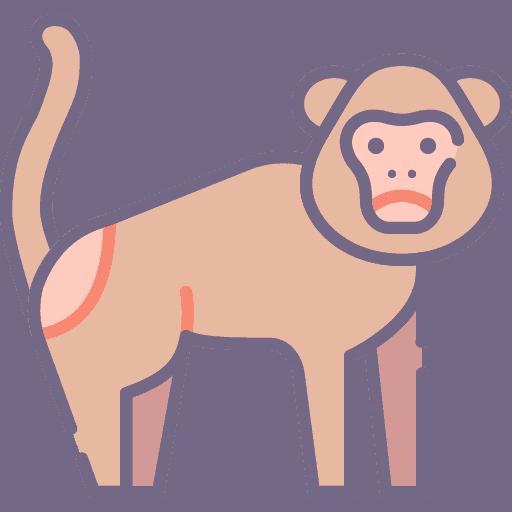Monkey - Maimuta