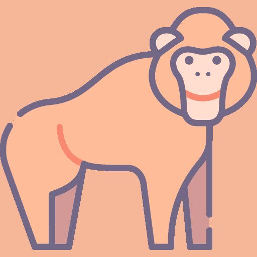 Orangutan - Urangutan