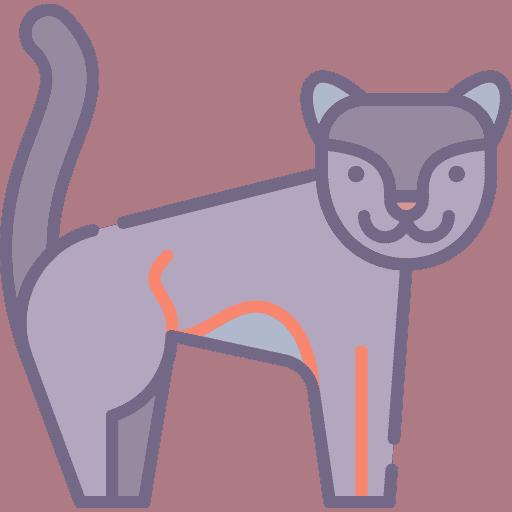 Panther - Pantera