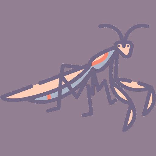 Praying Mantis - Calugarita