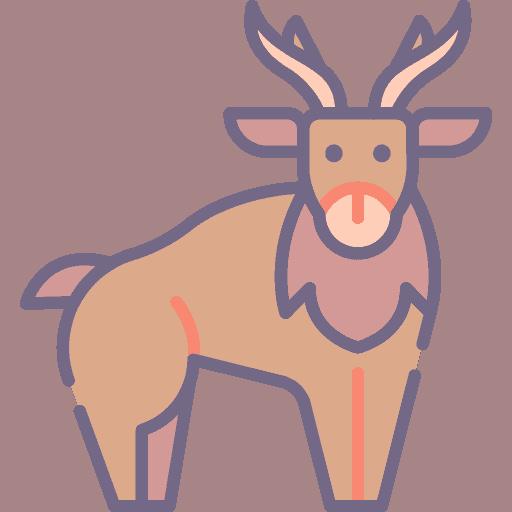 Reindeer - Ren
